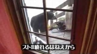 《内容》 ☆野生の熊ちゃんと番猫ちゃんの戦いです ☆Bear and cat's figh...