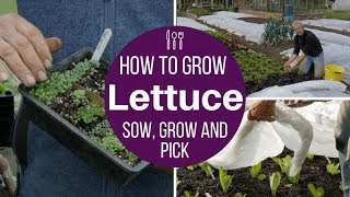How to grow lettuce: sow, plant, protect plus the Charles Dowding picking method