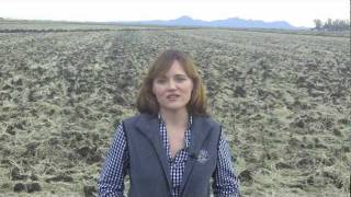 Jessica Lundberg on Sacramento Valley Rice Fields
