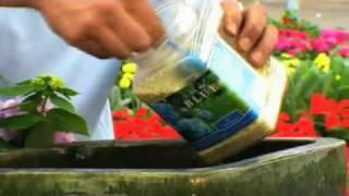 Gardening Tips: Endless Summer® Hydrangeas