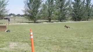 Obedience Training With Nika