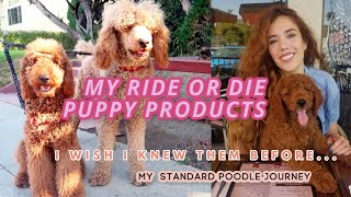 5 ESSENTIAL ITEMS FOR YOUR NEW STANDARD POODLE PUPPY + info I wish I new before getting them.