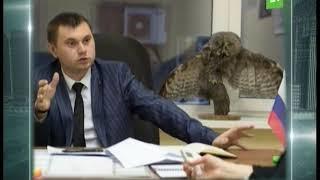 Смотреть Иван Ургант высмеял челябинского чиновника с чучелом совы на столе онлайн