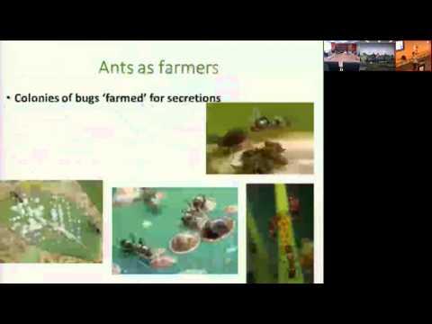 NICTA-ORG Seminar: Tanya Latty - Learning From Nature