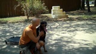 Dallas Dog Training   Redeeming Dogs   Ike The Doberman   Tod Mcvicker - Dog Trainer