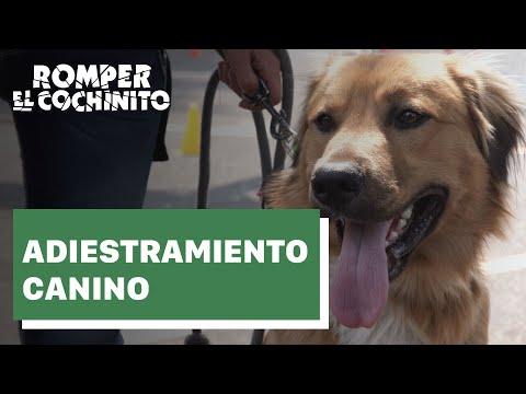 Todo lo que debes saber sobre el adiestramiento canino
