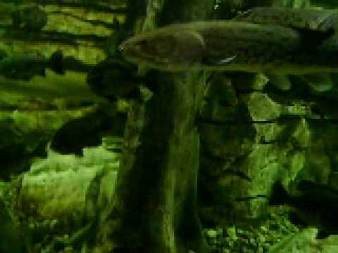 Cabela's Aquarium Hamburg, Pennsylvania 12/31/08