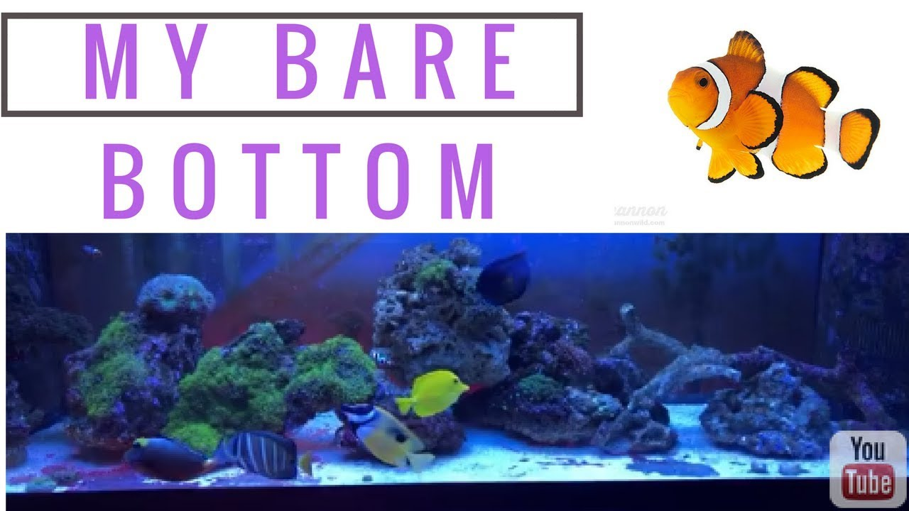 bare bottom saltwater tank sand bed depth no sand bed