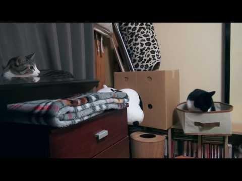 あくびがうつる猫 - Cats Contagious Yawning -