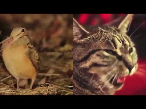 "Bird and Cat Sing ""Shine"" FULL SONG"
