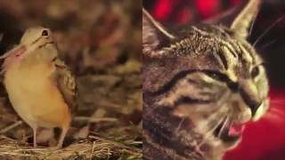 Bird and Cat Sing 'Shine' FULL SONG