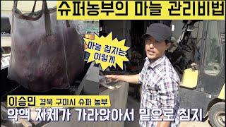 [한국농수산TV] 슈퍼농부가 마늘을 심기까지 관리하는 …