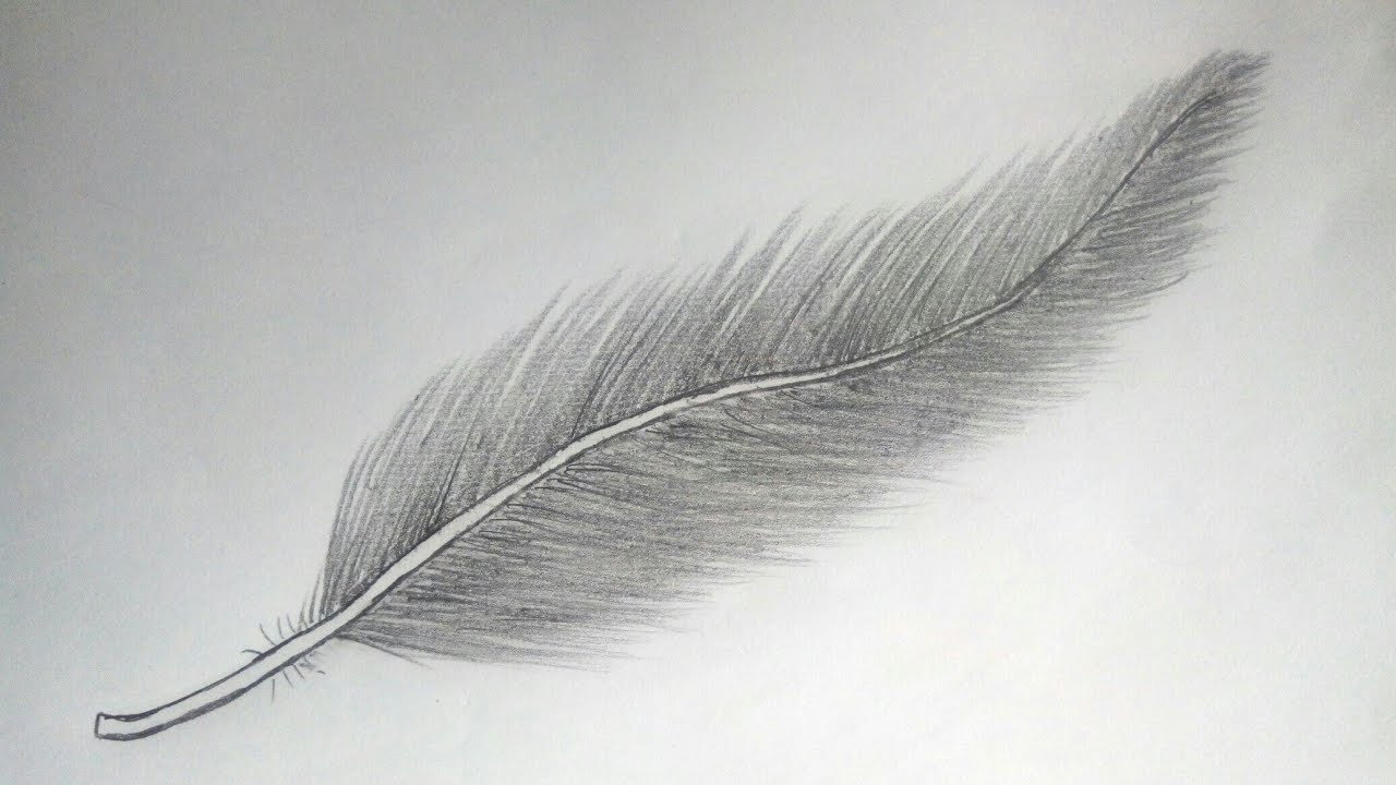 How to draw feather ||pencil drawing||easy feather drawing ...