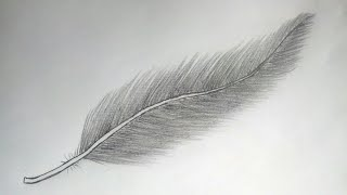 feather pencil easy drawing draw