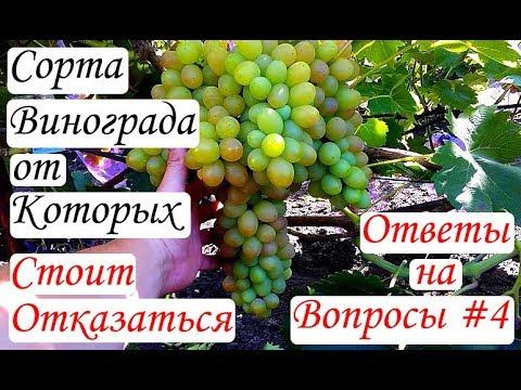 Сорта винограда, от которых стоит отказаться. Ответы на вопросы #4