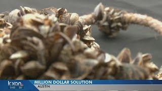 Austin Water works to combat smelly water from dead Zebra mussels