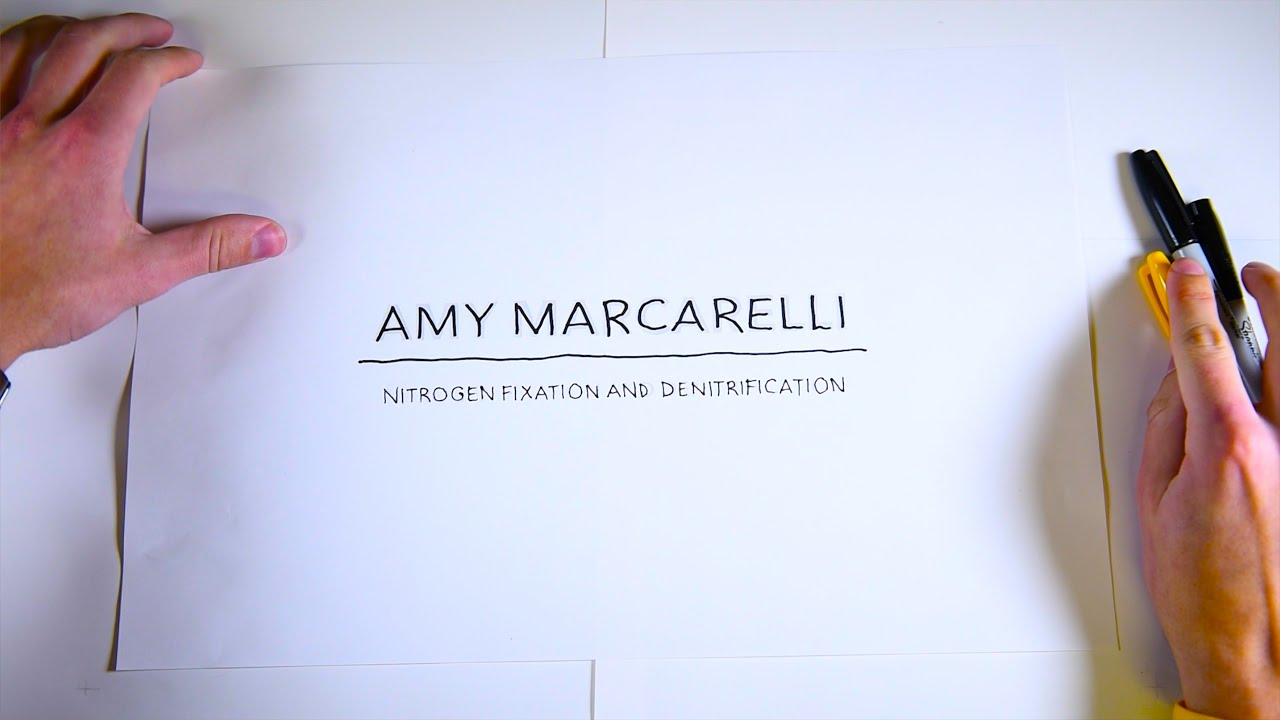 Preview image for Amy Marcarelli: Denitrification TL;DR video