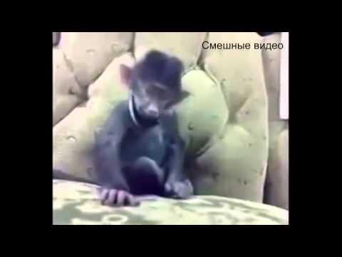 Александр Роджерс о последних событиях на Украине
