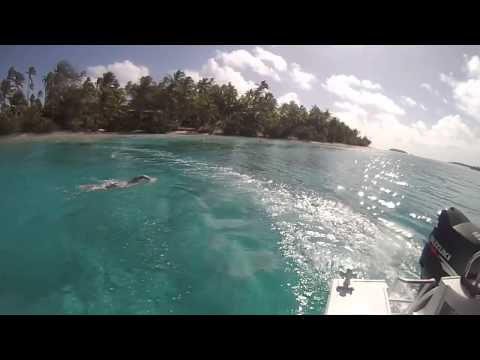 Real Swim Cook Islands Aitutaki