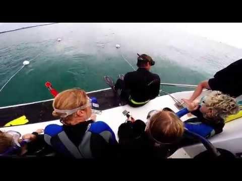 Melbourne Dolphin Swim