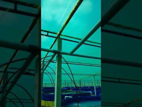 #Biofloc Fish Farming Technology Installed By #HINDAVI AQUARIUM #25 Tanks Of 5 Dia