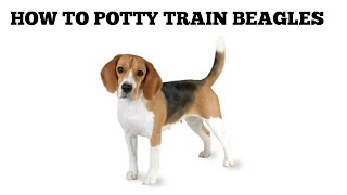 How To Quickly Potty Train Beagles