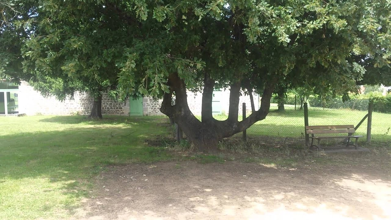 un arbre au nom allah(1) - YouTube