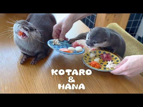 カワウソコタローとハナ 贅沢な朝ごはんいただきます! Otter Kotaro&Hana Lovely Breakfast