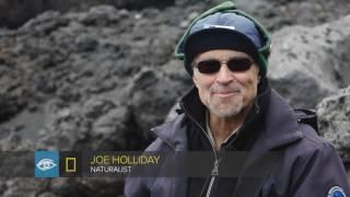 Jan Mayen Island | Arctic | Lindblad Expeditions-National Geographic