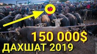 ЭНГ ДАХШАТ ВИДЕО 2019 МОЛ БОЗОР НАРХЛАРИ
