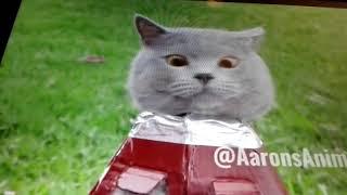 Смотрим серого кота приколиста!!!