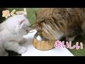 猫は牛乳が好き?!