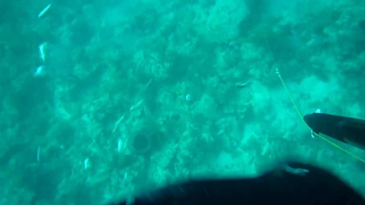 Cameron kirkconnell grouper dating