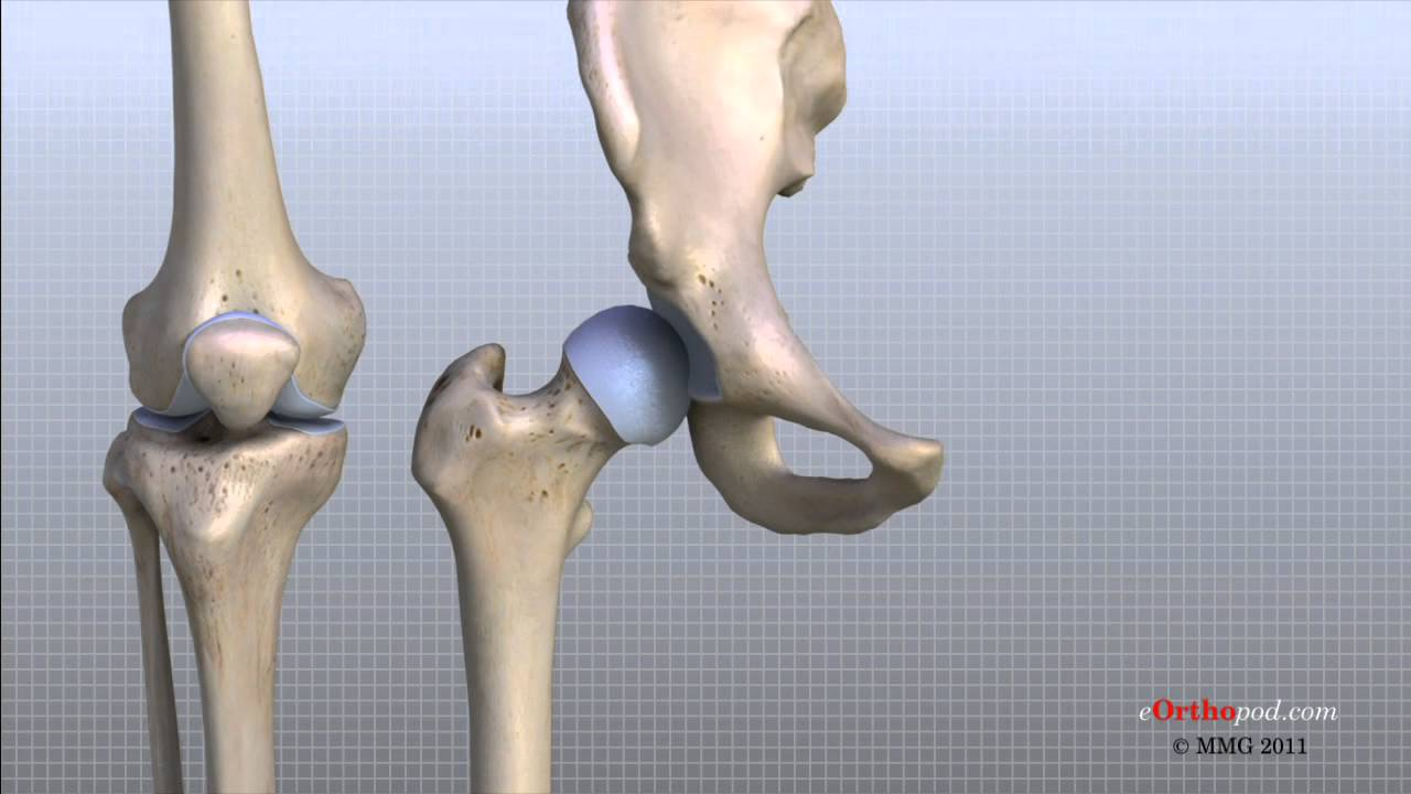 Knee Anatomy Animated Tutorial - YouTube
