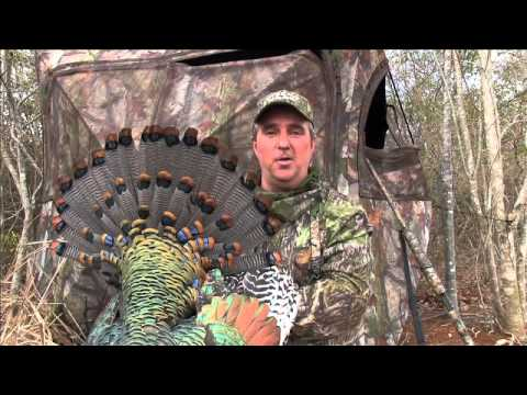 Beautiful Yucatan Ocellated Turkey With SIX SPURS!