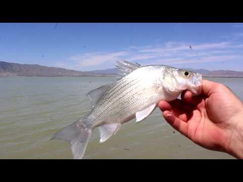 Fishing Utah Lake / Fishing Tips - Utah Outdoor Activities