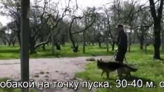 Работа с собакой на ящике ПСС 18 04 2014