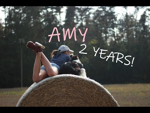 2 YEARS!║Border Collie AMY