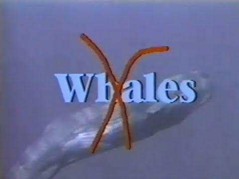 Whales Wails