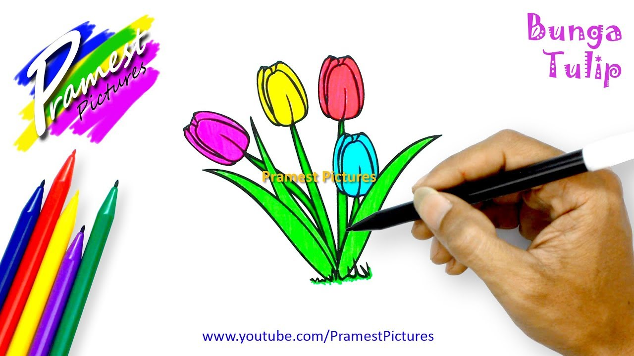 Tulip Cara Menggambar Dan Mewarnai Gambar Bunga Untuk Anak Anak