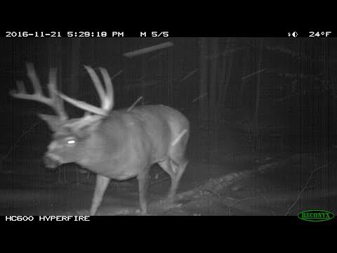 Eastern Ontario Wildlife Trail Cam with YETI Capture