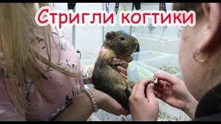 Кабачку поранили три пальца. Новая клетка для морских свинок.