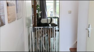 Hoe kan ik mijn hond afleren om te blaffen naar visite?
