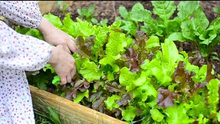 Growing Vegetables In A Small City Garden | Joy Of Simple Living