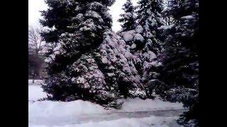 Снег на елках thumbnail