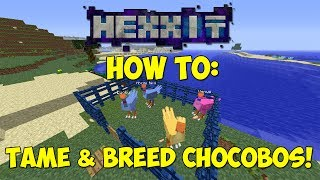 HEXXIT: How To Tame & Breed Chocobos!