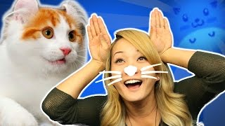 Funniest Cat Games IN THE WORLD