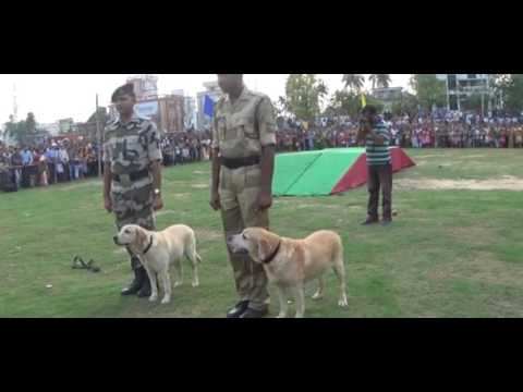 "Dog Show Program Agartala ""NEWS VANGUARD"" Telecast news 26/3/2017"