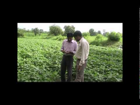 Insect Pests of Soybean and their Management Hindi ASA Madhyapradesh