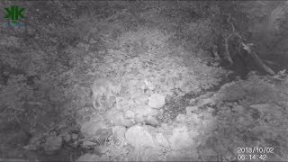 Fotokapan görüntülerimiz: Kurt, Çakal, Sincap, Arap tavşanı, Alakarga